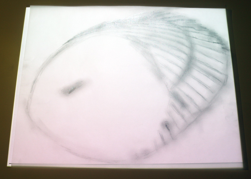 Shell on tracing paper