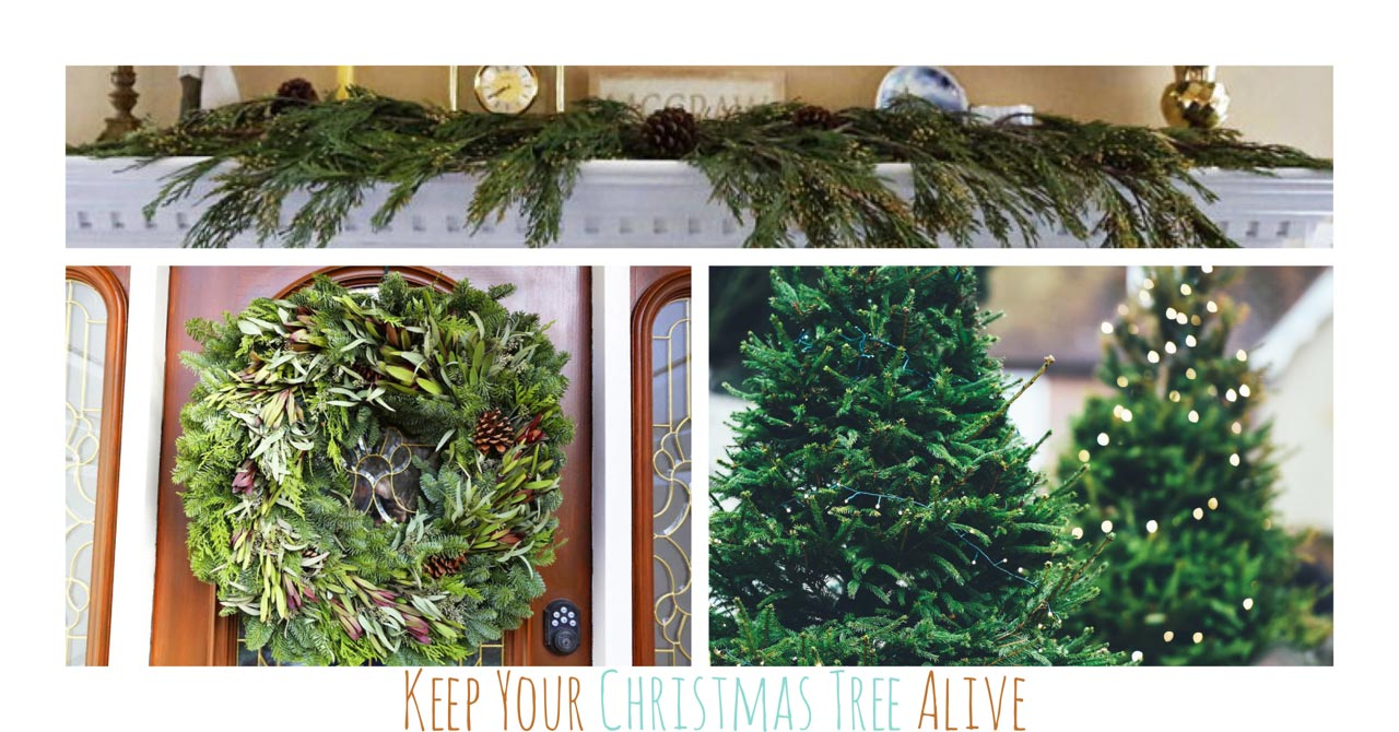 Make Your Live Christmas Tree, Wreaths and Garland Last Longer ...